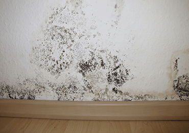Precision-Damp-Proofing-Sheffield