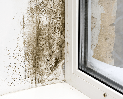 Treating-Condensation-Black-Mould