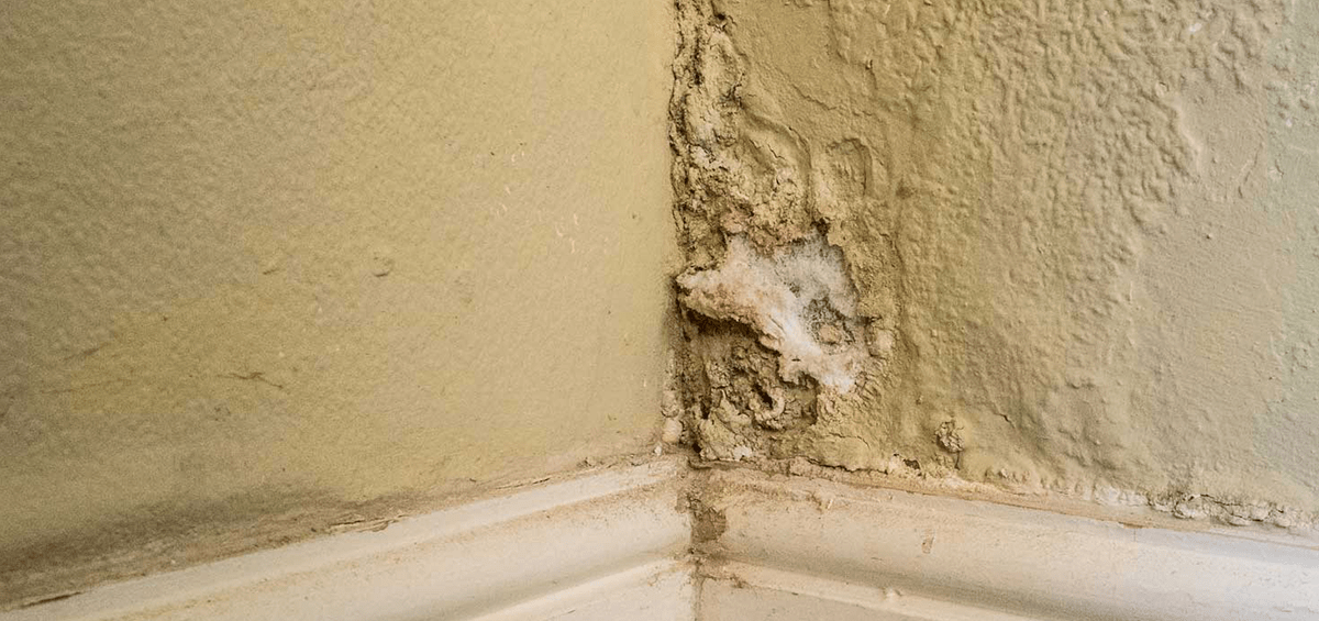 My house is damp what can I do about it  Preservation Expert